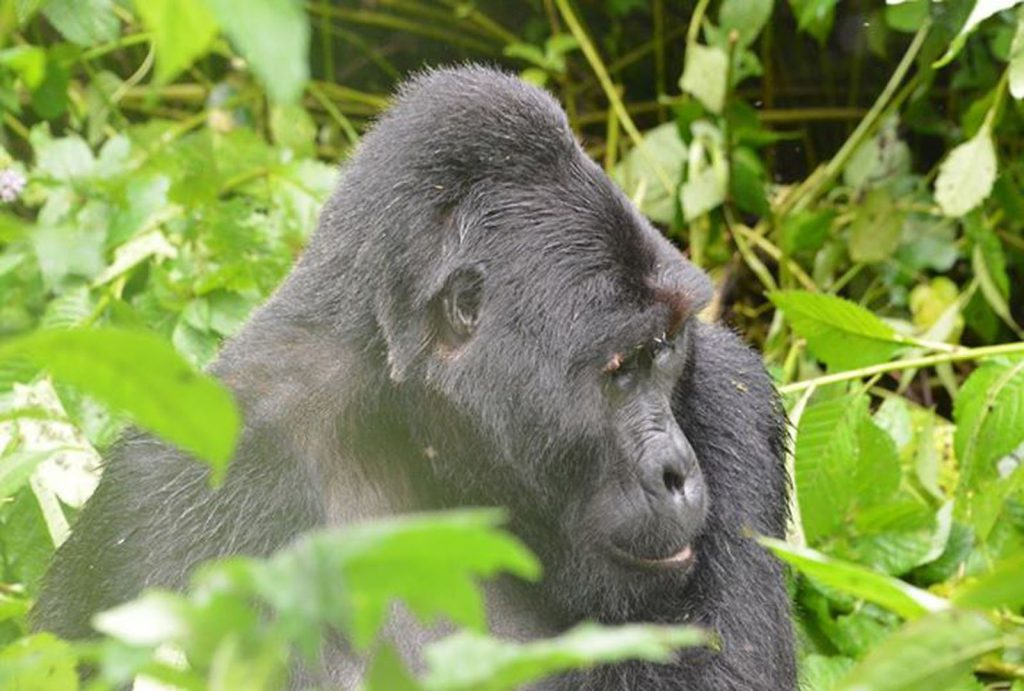 10 Days Cheap Gorilla Trekking Uganda & Wildlife